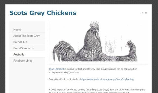 Scots Grey Chickens